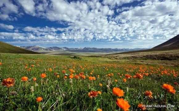 Весна на плато Укок - Горный