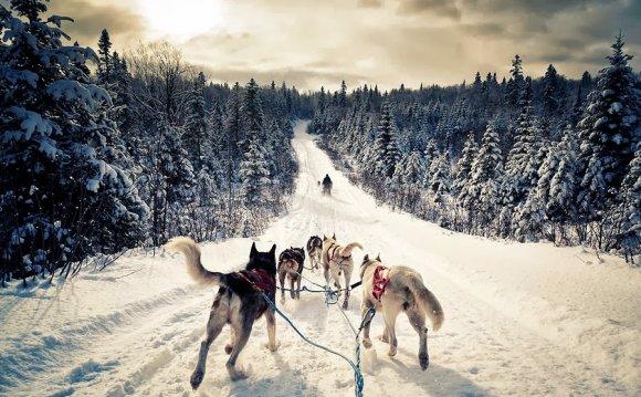 собаки,живность,Россия